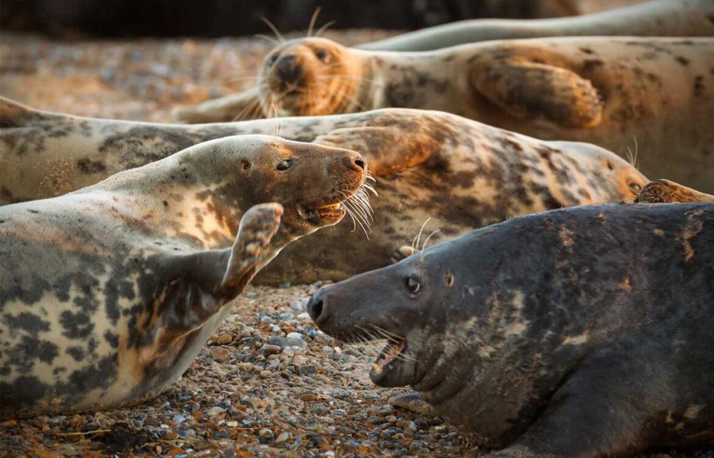 Blakeney seal trips